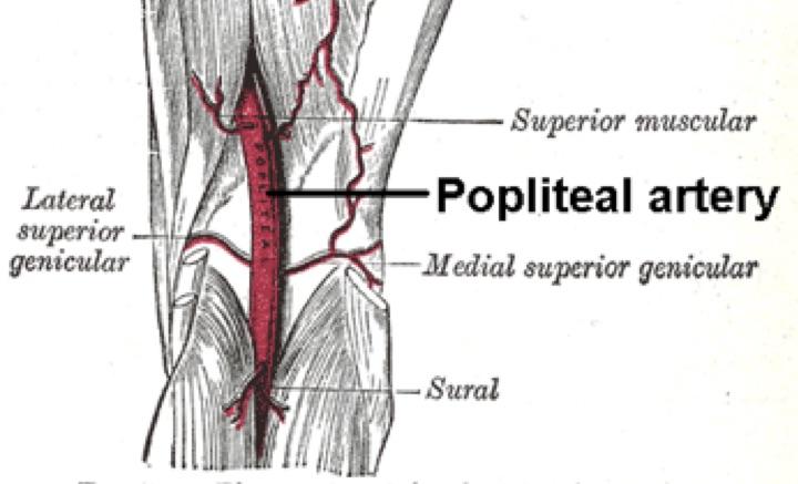 Φυσιολογική πορεία ιγνυακής αρτηρίας – popliteal artery